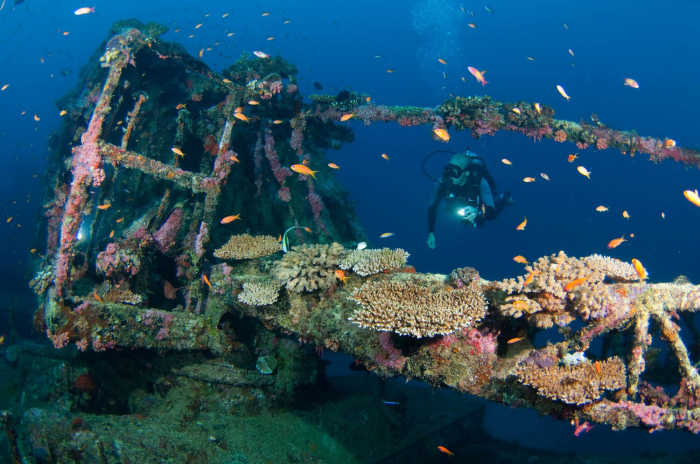 Maldives South Ari Machachafushi Wreck