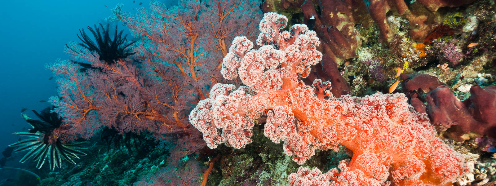 Best Coral Reef Diving Asia Banner