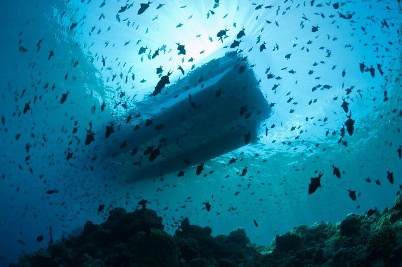 Sulawesi-Scuba-Diving-01.jpg#asset:9378