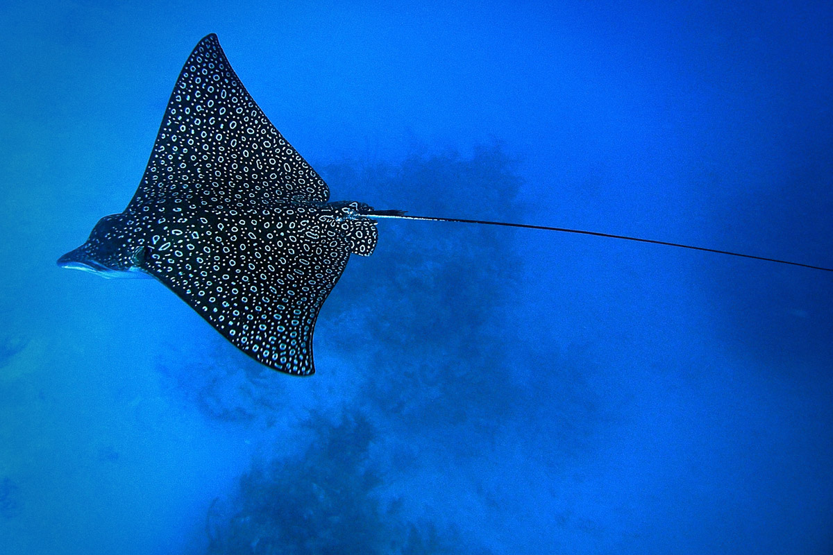 Turneffe Atoll Lighthouse Reef Great Blue Hole Belize Diving 4