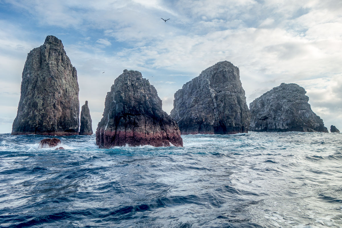 Malpelo Island Colombia Diving 6