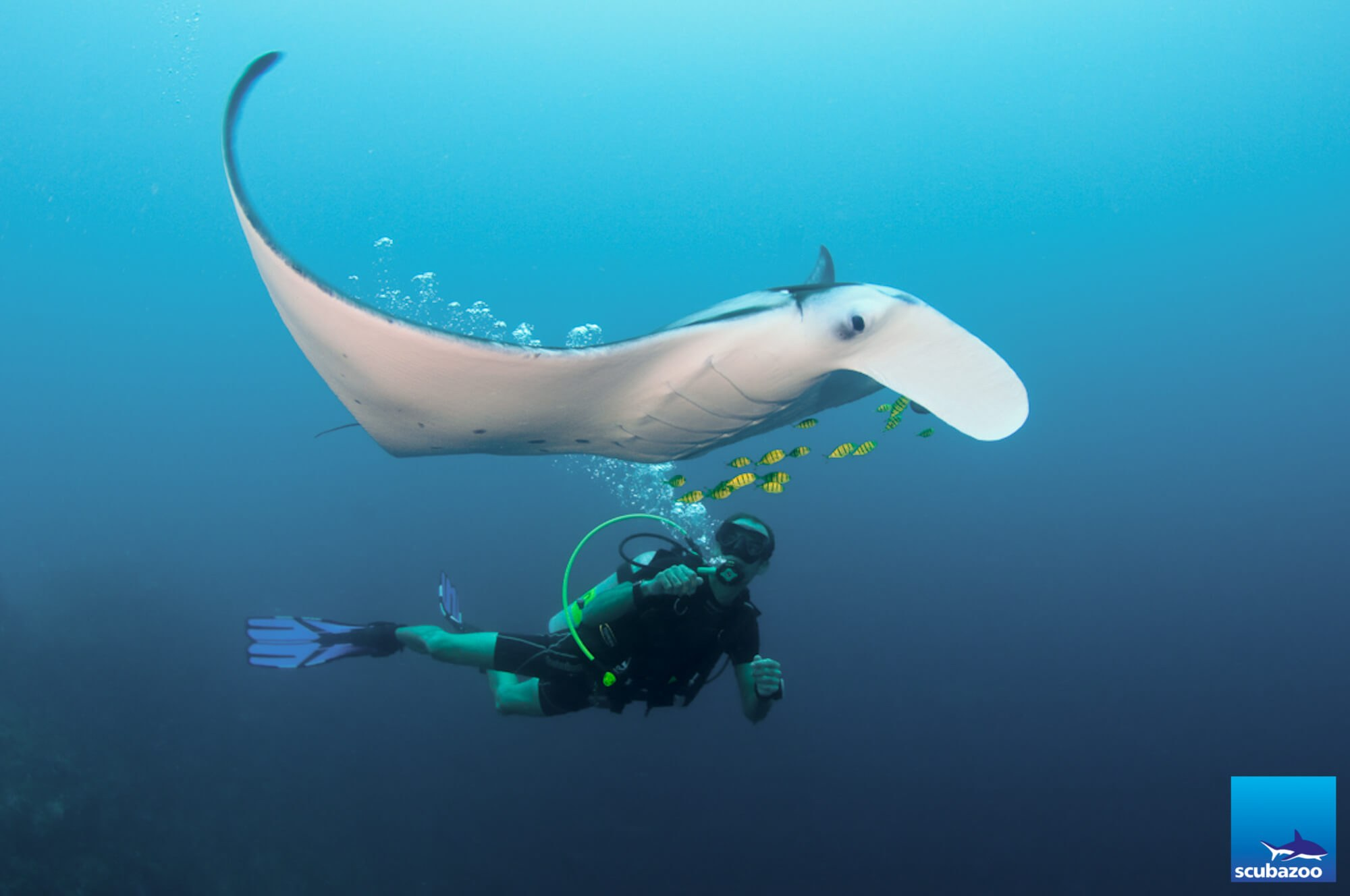 Maldives_Rasdhoo_Manta_Ray_Rescue-2.jpg#asset:1015