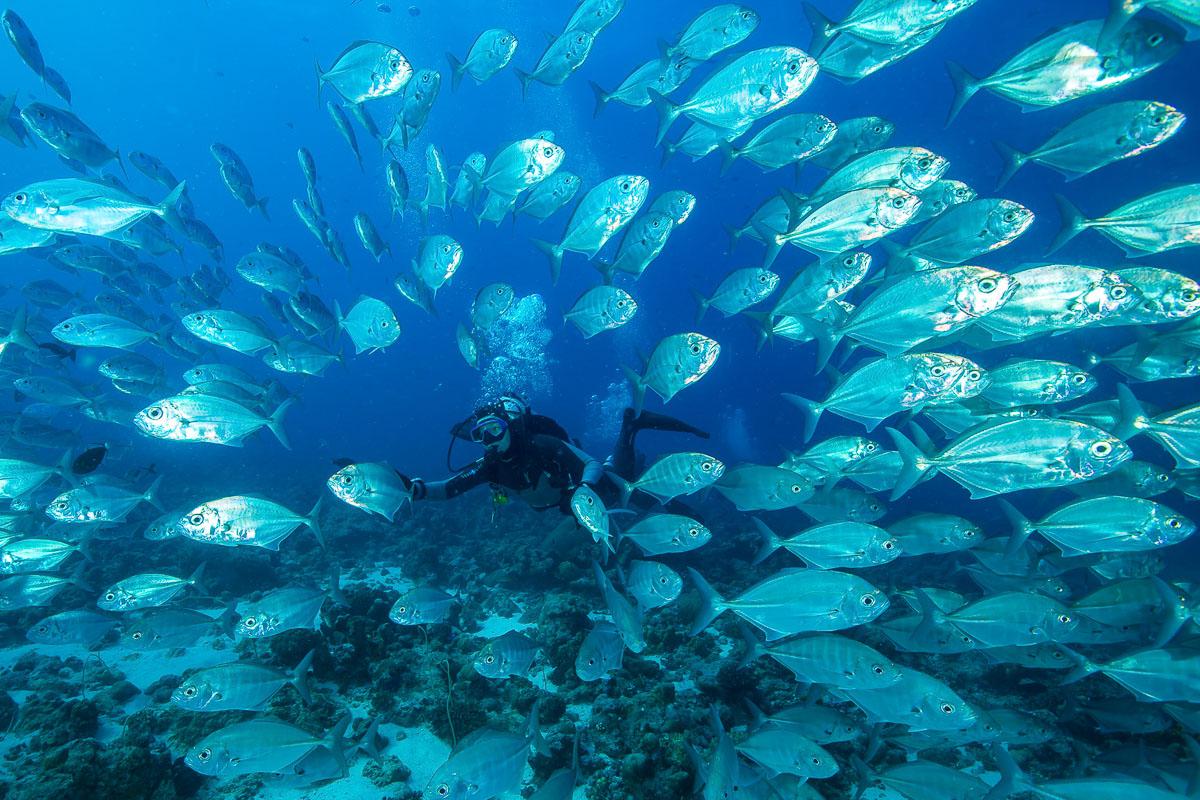 Palau Micronesia Scuba Diving 11