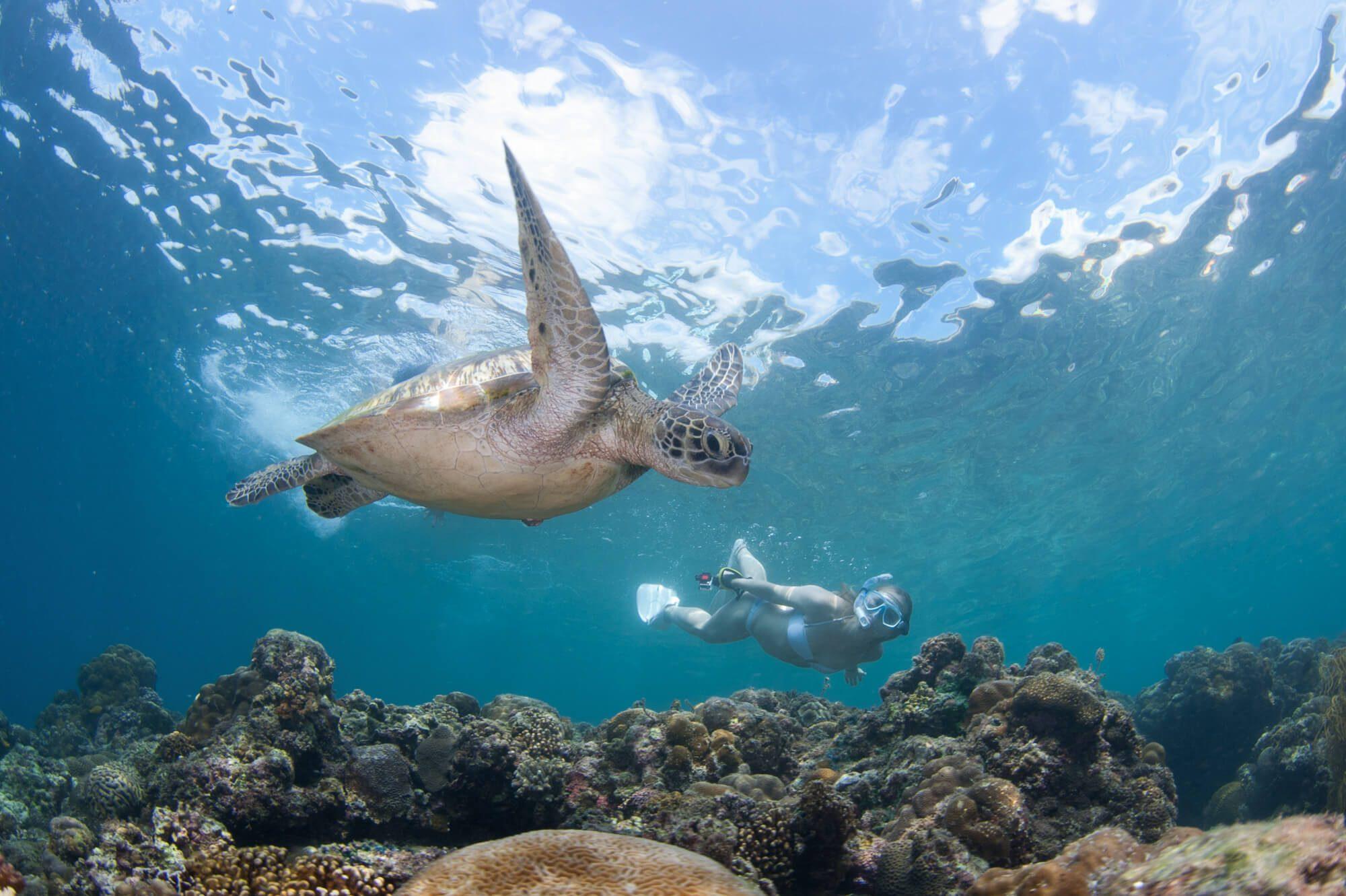 Moalboal Sampaguita Turtle