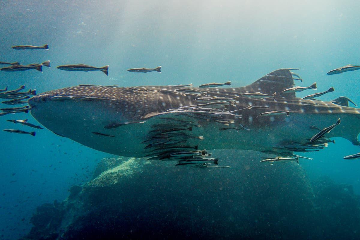 Koh Tao Scuba Diving 07